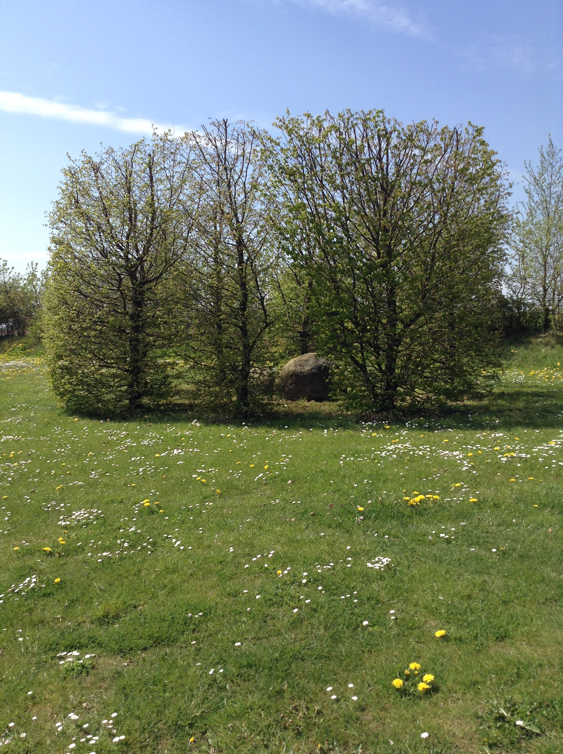 Park im Frühling - Seminarhaus Schlagsülsdorf