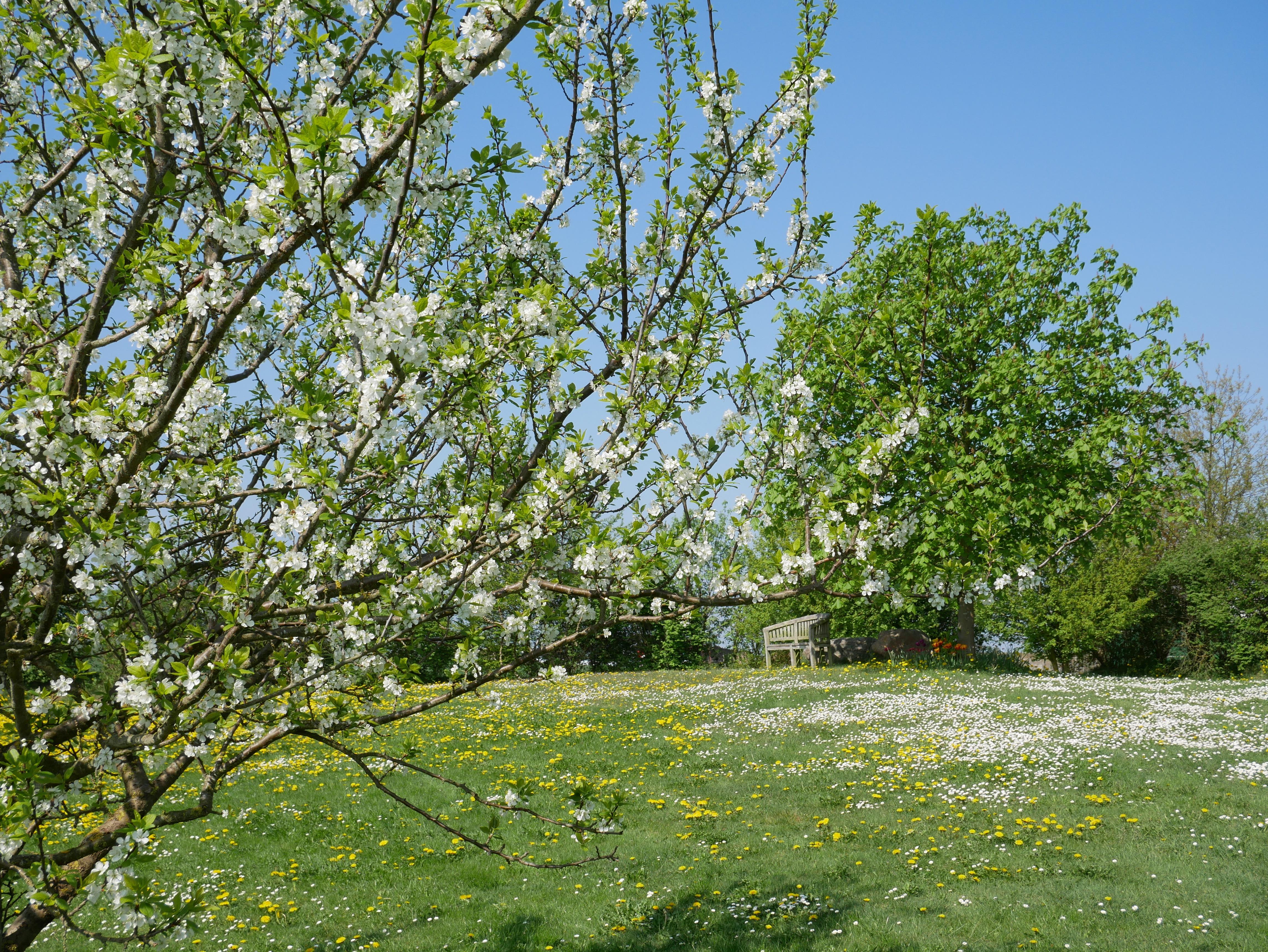 ...im Frühling